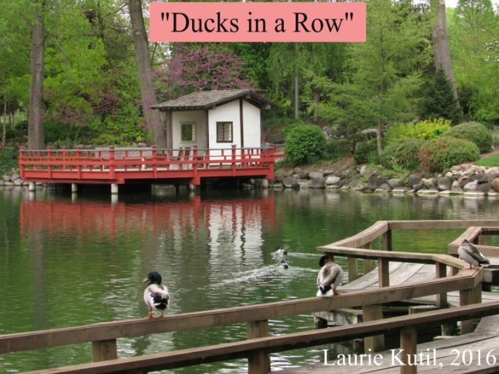 ducks-in-a-row-at-rotary-gardens