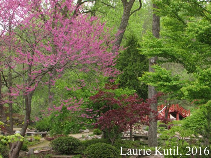 redbud-and-bridge-wm-img_7560