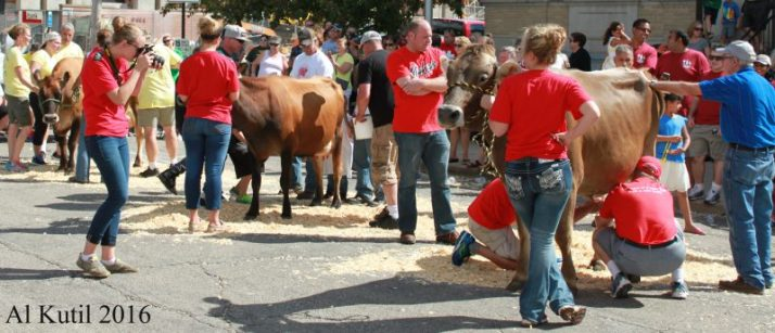 swiss-cows-at-cheese-days-wm