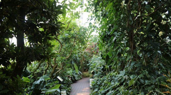 Olbrich Conservatory inside
