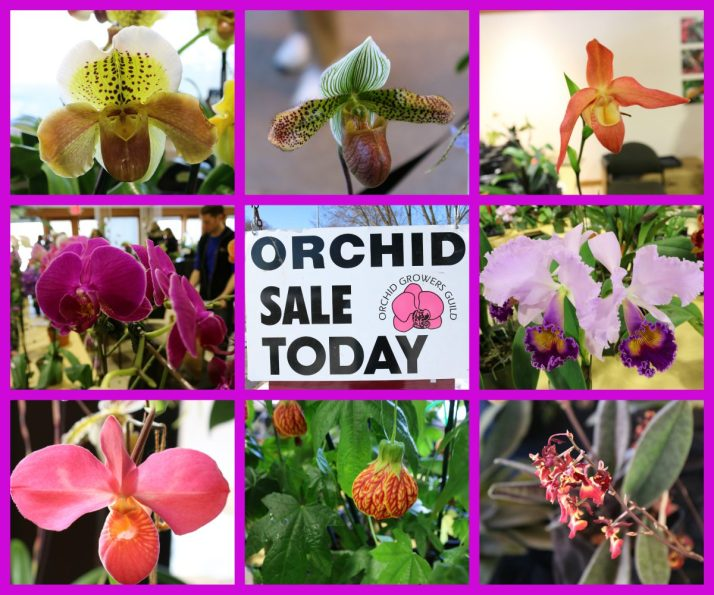 orchids-at-olbrich